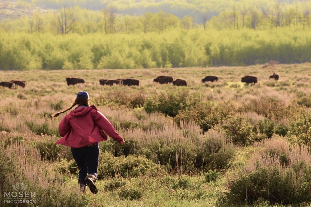 Running toward the buffalos