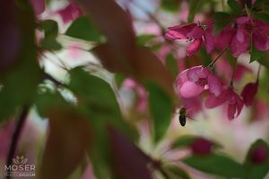 Alexis-Moser-flowers-and-blooms-of-spring-Bee-Leaves-Cherry-Blossoms