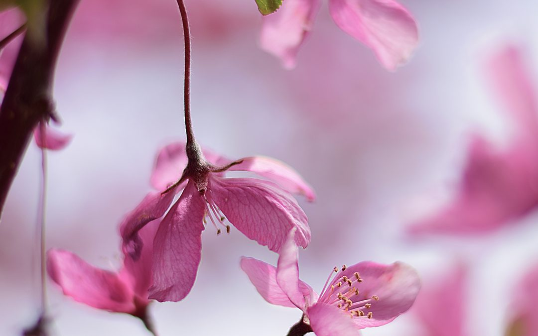 FLOWERS AND BLOOMS OF SPRING II