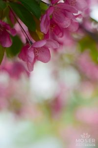 Alexis-Moser-flowers-and-blooms-of-spring-Blossoms-on-bokah