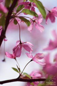Alexis-Moser-flowers-and-blooms-of-spring-single-Blossoms